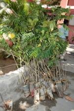 ymca-tree-planting-stills-002